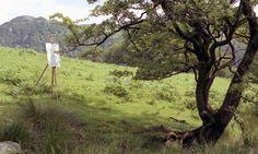 Hawthornlandscape@72.jpg