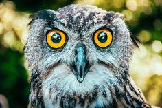 Občas potkáte někoho zajímavého - dovolte mi abych vám představil Medarda :) #zoo #zooolomouc #olomouc #olomouccity #nature #lovenature #owl #owls #bird #birds #from #ostrava #ostravacity #janjasiok