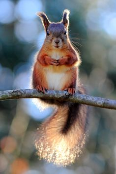 Cute squirrel <3