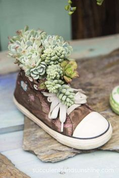 Shoe filled with succulents at the Succulent Cafe in Oceanside - www.succulentsandsunshine.com