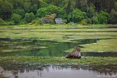 Hamma Hamma Estuary • Hood Canal, Washington