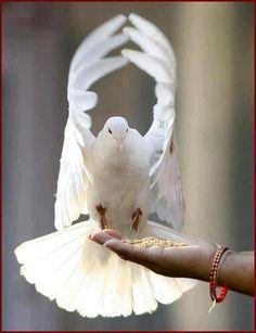Pour la paix...