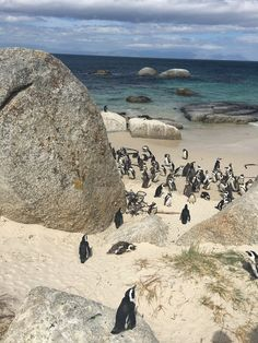 Boulders Beach Boulder Beach, Cape Town, Bouldering, South Africa, Grand Canyon, Water, Travel, Outdoor, Gripe Water