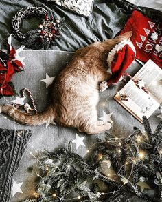 holiday mood mood 30 Chic Pics To Awake The Christmas Spirit Holiday Mood, Christmas Mood, Merry Little Christmas, Christmas Flatlay, Xmas Holidays, Happy Holidays, Christmas Animals, Christmas Cats, Christmas Wreaths