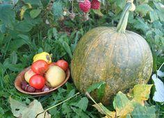 Sztuka pielęgnacji...: Dynia w roli głównej Pumpkin, Vegetables, Food, Pumpkins, Essen, Vegetable Recipes, Meals, Squash, Yemek