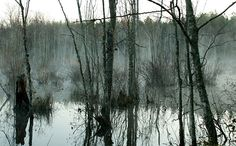 blackwater swamp virginia | 13-Mile Woods, NH Northeast Kingdom Forest Legacy, VT Pond of Safety ...
