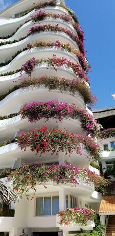 Perfectly Twisty Tree Modern Mansion Interior, Miramar Hotel, Eastern Redbud, Really Cool Photos, Plant Fungus, Carnivorous Plants, Bougainvillea, Puerto Vallarta