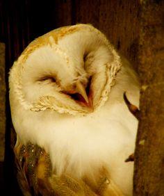 ex0skeletal:  end0skeletal:  Happy Owls!  Because everyone needs smiling owls in their life.