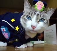 Cat police officer