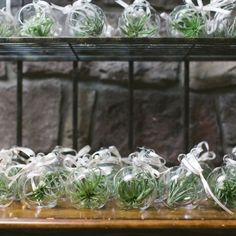 Bomboniere Idea - Air Plants: Hanging air plants are bang on trend. Guests will be thrilled with these green gifts as they need little maintenance and will be a constant reminder of your celebrations. Photography: Love Me Do Photography
