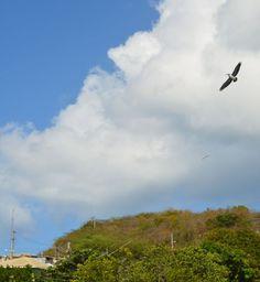 Cerca del muelle de Culebra. Foto José E.  Maldonado / www.miprv.com