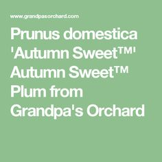 Prunus Domestica Autumn Sweet Plum From Grandpa S Orchard