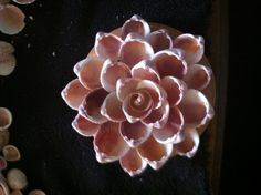 by brandi Sea Crafts, Craft Stick Crafts, Crafts To Make, Hobbies And Crafts, Seashell Art, Seashell Crafts, Flower Crafts, Pista Shell Crafts, Seashell Christmas Ornaments