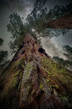 """Photographer Beth Moon documents the world's oldest trees by the starry light of the night sky.  Photo: """"Elnath,"""" with a giant sequoia in Sequoia National Forest, California"""