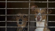 Tennessee's animal abuser registry will be the first of its kind in the United States.