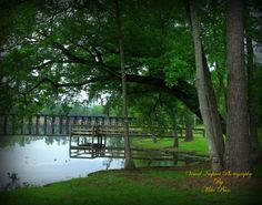 Cherokee Lake  in Thomasville Ga.  Photography by Mike Bass