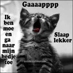 Slaap lekker Krabbels Animals And Pets, Funny Animals, Sleep Forever, Love Wishes, Sky Full Of Stars, Dutch Quotes, Good Night Sweet Dreams, Good Night Quotes, Sleep Tight