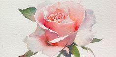 Акварельные розы тайского художника ЛаФе. оннастолько тонко передает очарование этого цветка средствами акварели, что кажется можно услышать аромат роз,