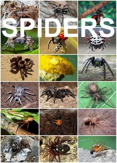Spiders both fascinate and frighten people. Check out these weird, amazing, interesting and fun facts about spiders taken from science, history, literature and mythology with cool photos and videos.