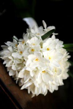 Wedding flowers - gorgeous spring flower-girl bouquet