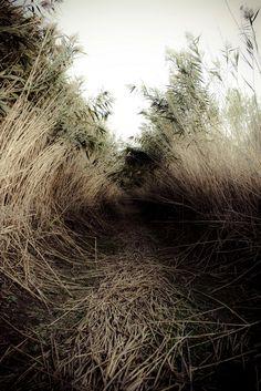 ...through a tall grass trail.