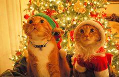 11 råd inför julhelgen från några självutnämnda experter - Sköna hem