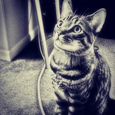 Miss you buddy :( cute cat