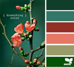 Design Seeds® | for all who ❤ color | branching color