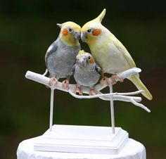 Cockatiel family wedding cake topper (with adorable baby!) by my friend @Bethany O'hara-Na. We are so making her make us a baby cockatiel to go with our cake toppers when we have a kid.