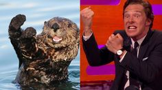 When Graham got Benedict Cumberbatch to impersonate some otters, because people…
