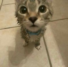 Cute Little Kittens, Cute Baby Cats, Cute Little Animals, Cute Cat Memes, Funny Animal Memes, Funny Animals, Pretty Cats, Beautiful Cats, Cat Dog