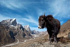 You never know who you'll run into on your way to Everest Base camp.