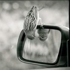 little bird. This is such a precious photo. Innocence personified!