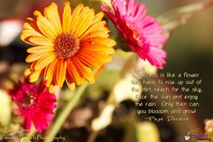 Success is like a flower - Inspired Marketing - I coined this saying with a picture of some flowers from my garden. Facing The Sun, Success, Inspirational Quotes, Sky, Marketing, Inspired, Sayings, Garden, Flowers