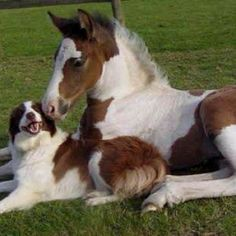 Horse   Dogs