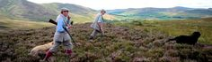 Walking up grouse in August in Angus, Scotland