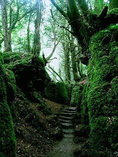 Gloucestershire, England feels like lord of the rings