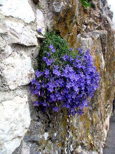 Image result for gourdon flowers france