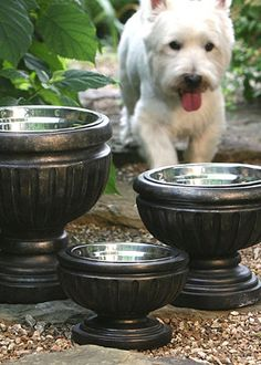 Takes your pet's dining experience to the next level!