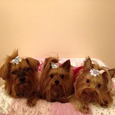 """This is Madison, Penelope, and Fiona looking like quite the trio in our """"Royal Bow"""". Could these three princesses be any cuter?!"""