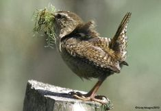 The Well Seasoned Nest Brown Bird, Blue Bird, Greenfinch, Cottage In The Woods, Photos Voyages, Tropical Birds, Little Birds, Bird Feathers, Belle Photo