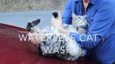 Cat Wash, High End Cars