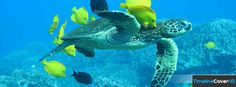 189918sea Turtle 4 Timeline Cover 850x315 Facebook Covers - Timeline Cover HD