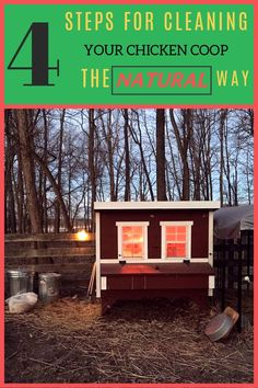Here are 4 easy steps for cleaning your chicken coop the natural way presented by the www.typesofchicken.com team. #chickencoop #cleaningchickencoop #chickencoopideas #chickenkeeping #backyardchickens #chickenkeepingforbeginners