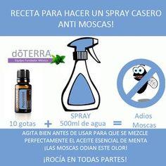 Aleja las moscas de tu hogar con #aceite_esencial de #menta #doTERRA Descarga…