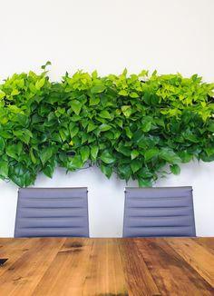 Atelier Cho Thompson has designed the new offices of car-sharing company Turo located in San Francisco, California. Turo approached us to lead an office Office Interior Design, Office Interiors, Best Office Plants, Workplace Design, Contemporary Office, Office Decor, Office Ideas, Commercial Design, San Francisco