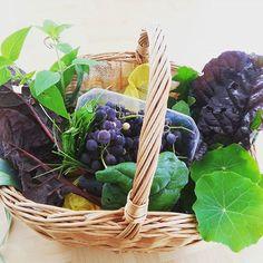 Own gardens' food ♡♡♡ Frisches aus dem Garten: Mangold, Trauben, Salbei, Salat, Kapuzinerkresse ♥♥♥ #frischergehtsnicht #food #healthy #healtyfood #garden #lovemygarden
