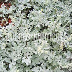 Planting Flowers, Silver, Projects, Photos, Inspiration, Image, Gardens, Landscape Fabric, Landscape Planner