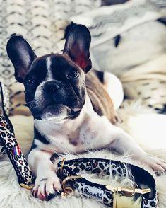 Petit Hugs Idea Trousse de Maquillage Portable pour Femme Imprim/é Animal Noir Boston Terrier 2