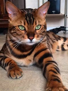 THE RULER OF THE HOUSEHOLD......ONE LOOK LIKE THIS AND WE KNOW HE MEANS BUSINESS...................ccp